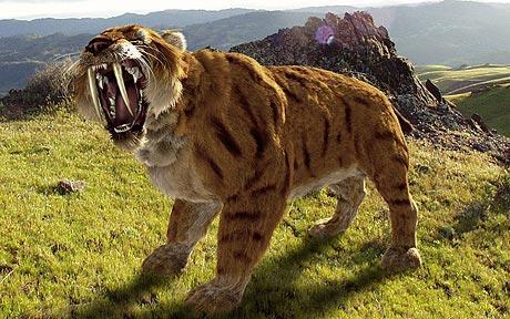 Dantura felinelor care au supravietuit extinctiei
