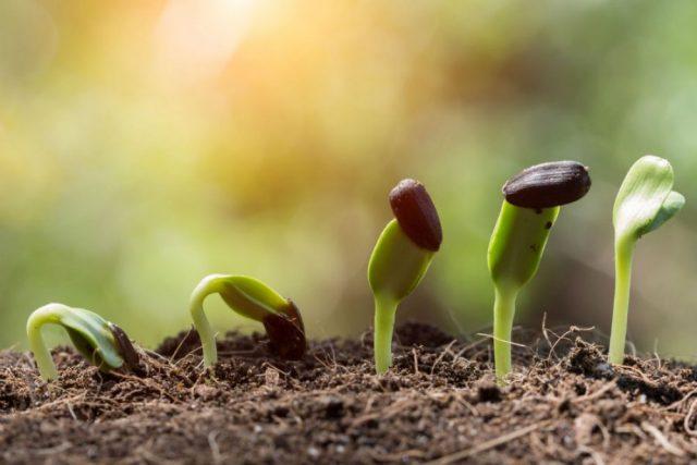 Tratarea semintelor si in ce scop pot fi folosite acestea